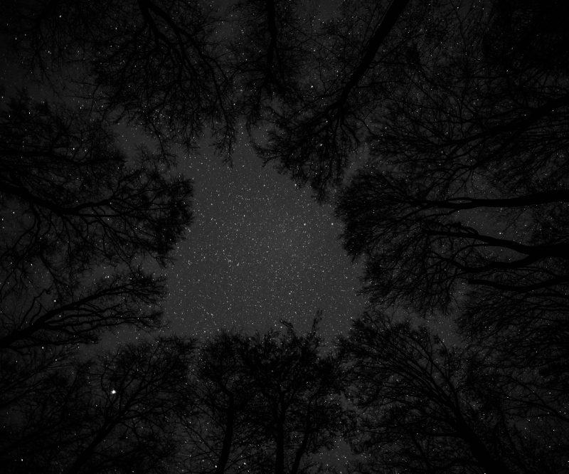 Bäume und Sterne